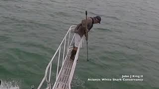White shark surprise breach off Wellfleet, MA (7/30/18) thumbnail