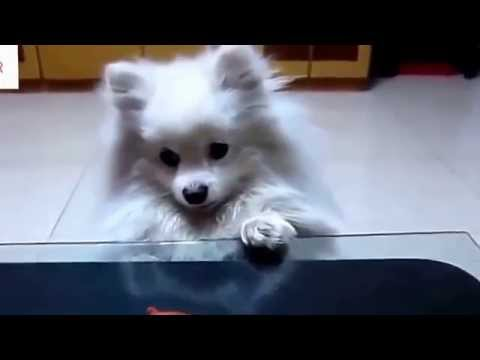 REALLY CUTE ANIMALS adorable compilation of super charming doggies mostly doing human things