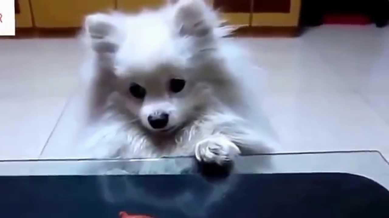 REALLY CUTE ANIMALS adorable compilation of super charming ...