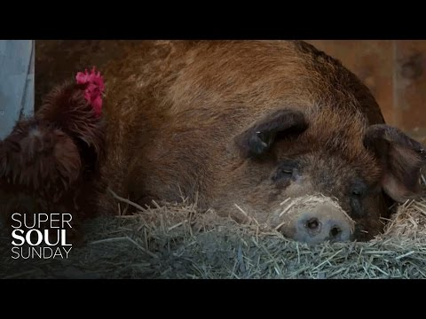 Super Soul Short: The Curious Friendship Between a Pig and a Rooster | SuperSoul Sunday | OWN