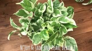 N'Joy Pothos & Jade and Pearl Pothos Debacle