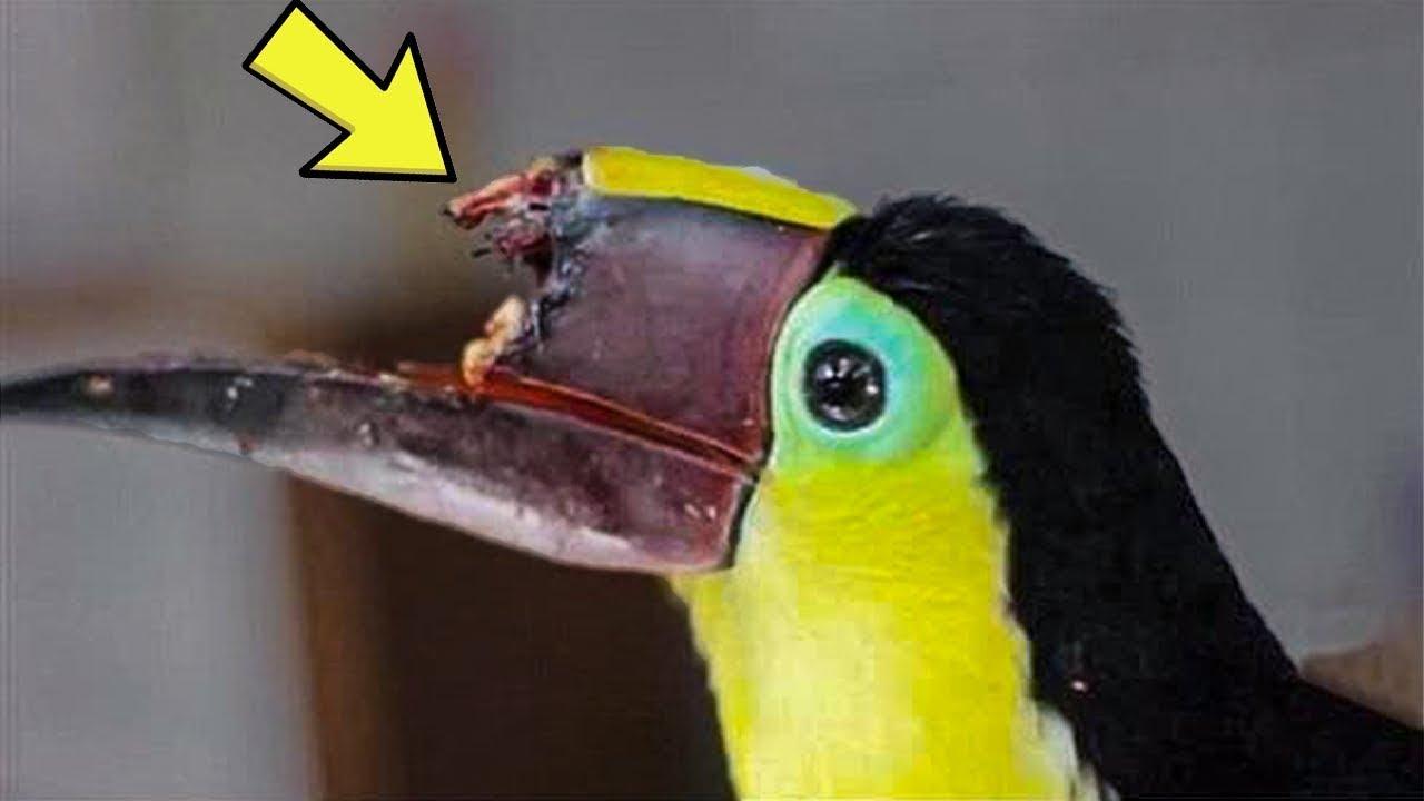 تقنية الطباعة ثلاثية الأبعاد تمنح الحيوانات فرصة ثانية للحياة !!  - نشر قبل 9 ساعة