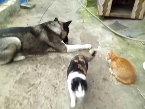 Имена для котов и кошек (1000+ вариантов). Как назвать