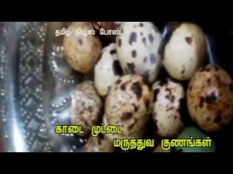 காடை முட்டையை  சாப்பிடலாமா ?- kadai Egg