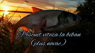 Pescuit viteză la biban (plus novac)