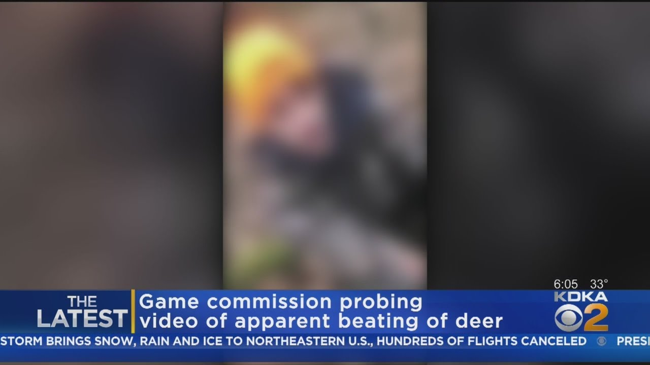 Game Commission Investigates Facebook Video Of Hunters Allegedly Abusing Injured Deer