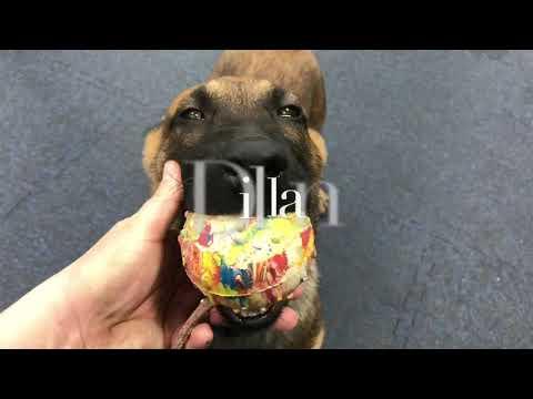 Puppy Training 1-18-18