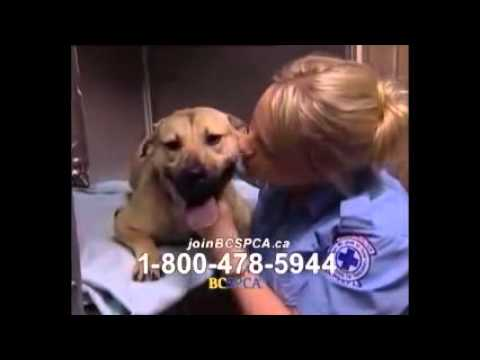 sarah mclachlan spca remix youtube