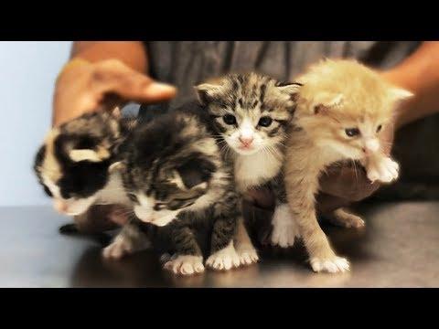 Encuentran CON VIDA a cuatro gatos recién nacidos EN UNA CAJA bajo la lluvia y les cambian la vida