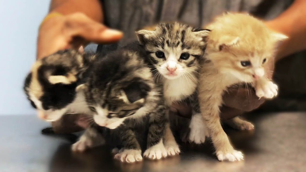 Encuentran CON VIDA a cuatro gatos recin nacidos EN UNA