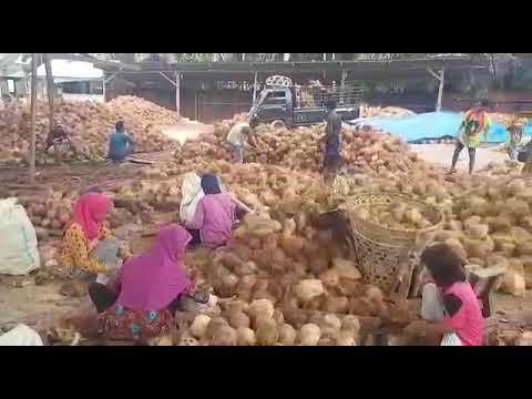 Coconut Copra Process