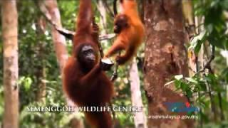 Malaysia Truly Asia  2011 : Nature