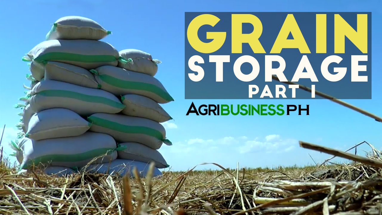 The importance of grain storage solution in the Philippines : Grain Storage  Solution Part 1