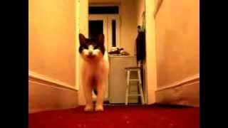 Kotki też potrafia rozmawiać :)