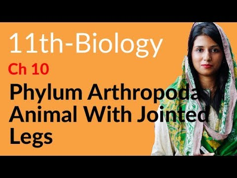 FSC book 1 Bio Phylum Arthropoda Animals with Jointed Legs -Bio Ch 10 Kingdom Plantae-Inter part 1