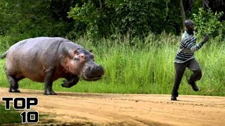 Top 10 Scary Safari Accidents