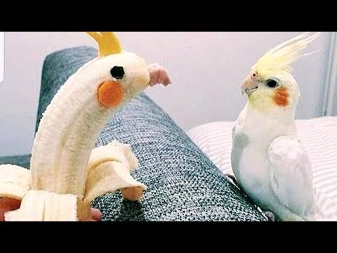 Did you know that BIRDS CAN BE EVEN FUNNIER THAN CATS?  - Funny ANIMAL compilation