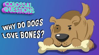 Why Do Dogs Bury Bones? | COLOSSAL QUESTIONS