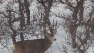 Wasatch Front Extended archery deer hunt 2016