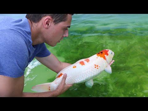 I BOUGHT MY DREAM FISH $5000 thumbnail