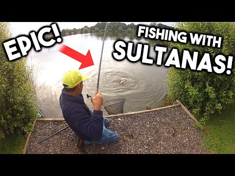 Fishing with SULTANAS!!