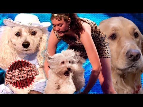 Got Talent - Amazing Dog Acts - Furry Friends Audition
