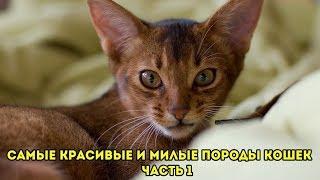 Самые красивые и милые породы кошек часть 1