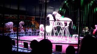Цирк шапито Демидовых Кошечки3 в Кемерово