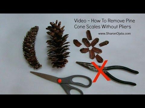 Remove Pine Cone Scales Easy Method Youtube