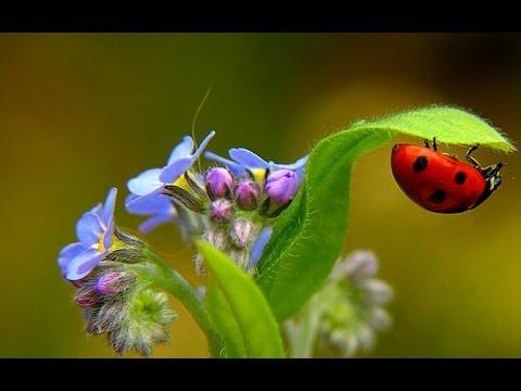 Садовые и полевые цветы