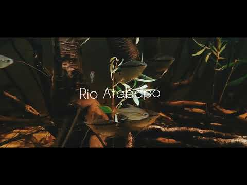 #BADC2020 / Rio Atabapo Flooded Forest, 1228 L
