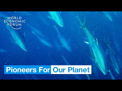 This Is How Blockchain Could Save Tuna Populations From Collapse | Pioneers For Our Planet