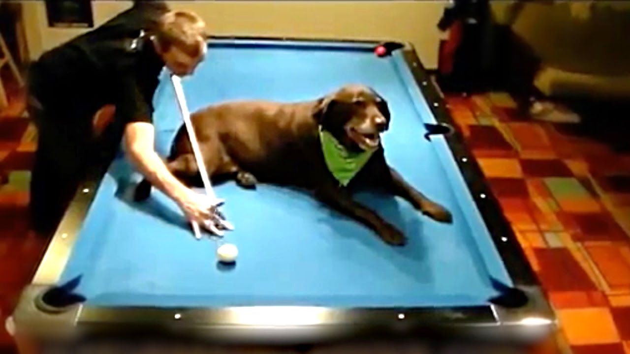 best pool snooker trick shots youtube. Black Bedroom Furniture Sets. Home Design Ideas