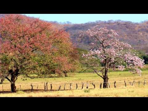 Punto Guanacasteco [Folklore de Costa Rica]