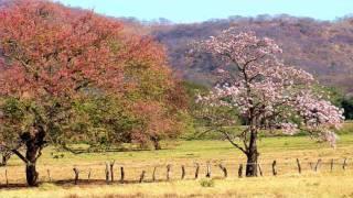 Punto Guanacasteco [Folklore de Costa Ri...