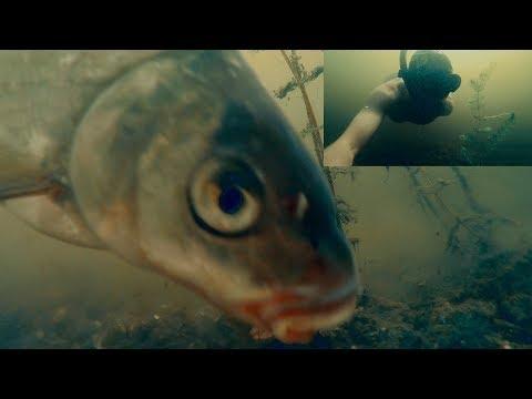 рейтинг лучших подводных камер для зимней рыбалки