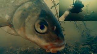 ЛЕЩ чуть не СЪЕЛ КАМЕРУ!!! Рыбалка + Подводная Съемка | Фидер и Донка