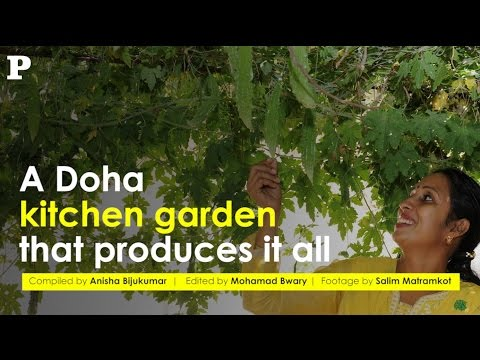 A Doha kitchen garden that produces it all