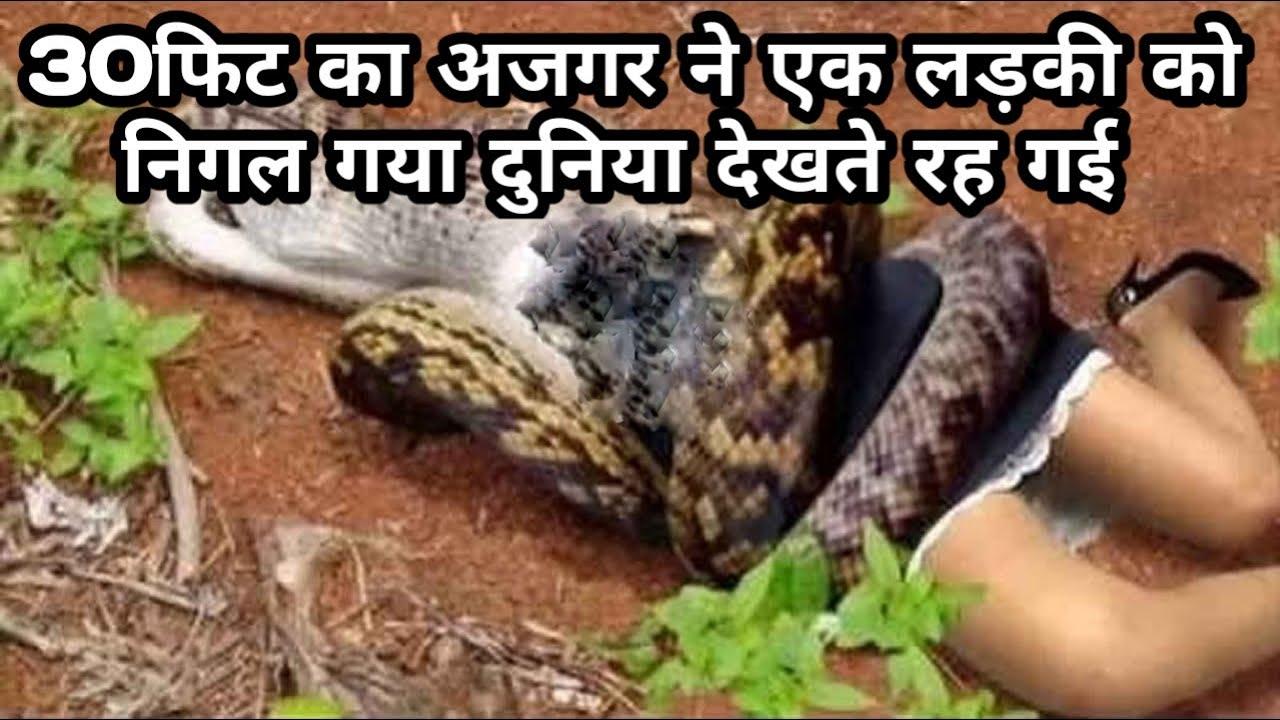 30 फिट का अजगर ने एक लड़की को निगल गया दुनिया देखते रह गयी #Bapi_da_snake_expert
