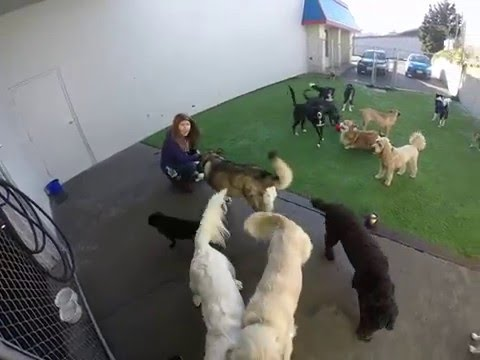 A Day at Positive Approach Dog Daycare in Tacoma
