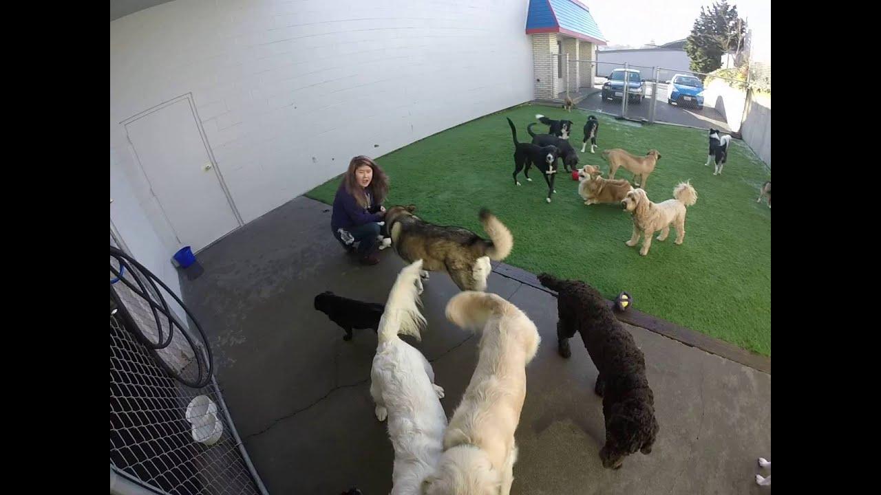 Dog Training Tacoma