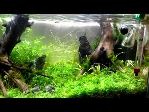 жизнь аквариума в течение года смотреть в хорошем качестве