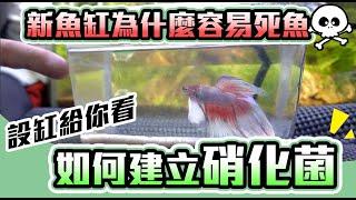 養魚前要準備什麼?新設缸的幾個觀念-實測分享|how to set up an fish tank Aquarium