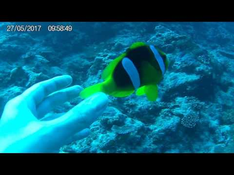 Port Vila, Vanuatu - Clown Fish