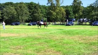 Friesekampioenschappen 2015 M1 DE