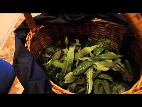 Иван-чай: полезные свойства и противопоказания, как заваривать