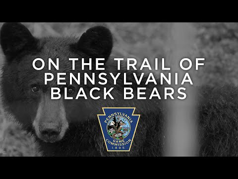 On The Trail Of Pennsylvania Black Bears (1991)