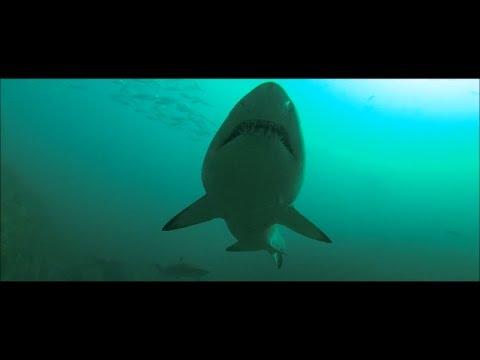 Фильмы про акул - смотреть онлайн бесплатно в хорошем качестве