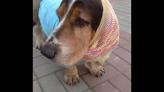 Летние вязаные шапки для собак
