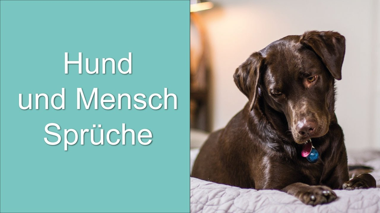 hund und mensch spr che youtube. Black Bedroom Furniture Sets. Home Design Ideas